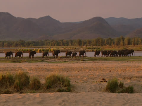 A landscape shot showing scrubland around the Zambezi River in Zambia. In the distance, a herd of African Elephants (Loxodonta africana) walks along the course of the river, while mountains loom behind them.