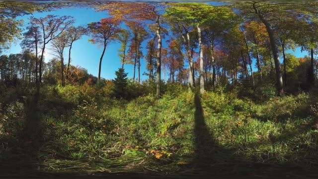 360VR landscape video autumn trees on clearing
