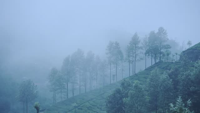 landscape view of tea plantations, munnar, kerala, india, on a rainy day - hill stock videos & royalty-free footage