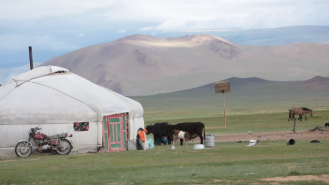 landscape with a ger and yaks - kazakhstan stock videos and b-roll footage