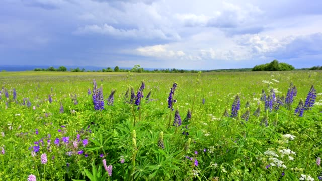 landscape with blooming summer meadow, lange rhön, rhön, bavaria, germany - springtime stock videos & royalty-free footage