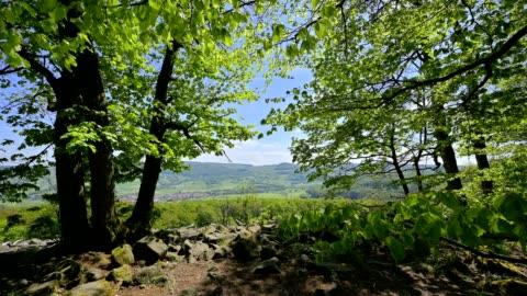 landscape with granite stone field, basaltblockmeer, in spring, schafstein, gersfeld, rhön, hesse, germany - deciduous tree stock videos & royalty-free footage