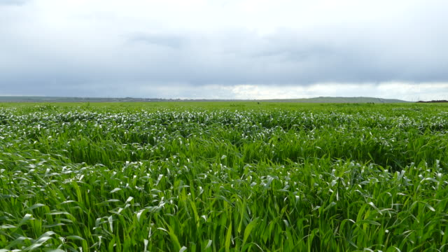 Landschaft mit grünes grass