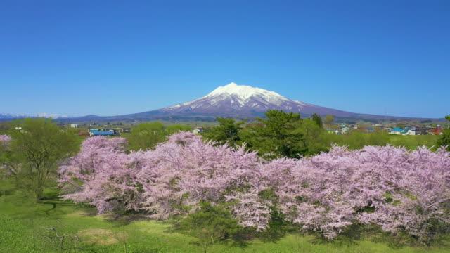 ws aerial landscape with mount iwaki and cherry blossom, hirosaki, aomori prefecture, japan - 桜の花点の映像素材/bロール