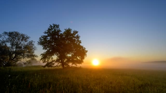 landscape with oak tree and morning mist at sunrise, nature reserve, im rußland und in der kuhweide, limeshain, wetterau district, hesse, germany - wiese stock-videos und b-roll-filmmaterial