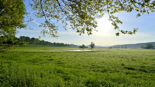 landscape with on morning with sun, nature reserve, im rußland und in der kuhweide, limeshain, wetterau district, hesse, germany - grass area stock videos & royalty-free footage