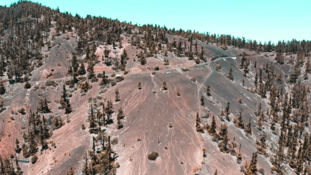 vídeos de stock e filmes b-roll de landscape with pine trees on the summits of tenerife from a drone - pine