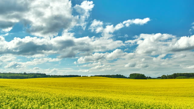 landscape with rape field - time lapse - polarizer stock videos & royalty-free footage