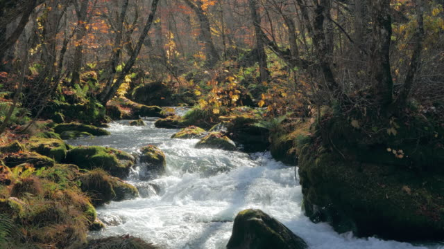 ws landscape with stream in forest, oirase gorge, towada, aomori prefecture, japan - oirase river stock videos & royalty-free footage
