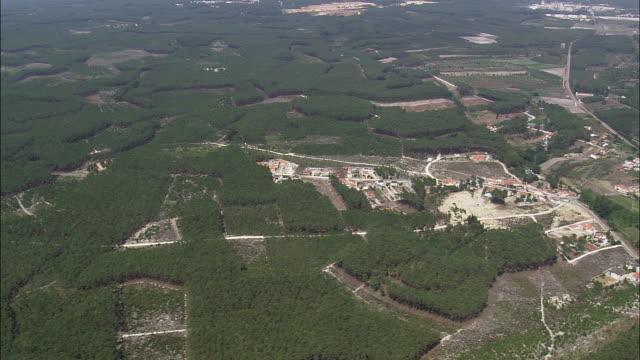 AERIAL WS Landscape with trees forming patterns / Nazare, Leria, Portugal