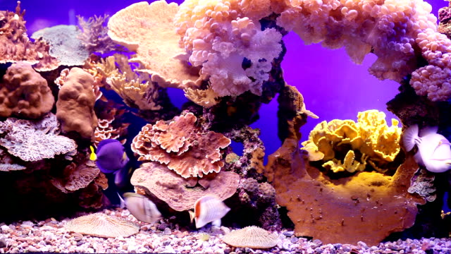 landscape with tropical fishes and corals. - aquarium stock videos & royalty-free footage