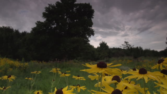 landscape with yellow flowers in foreground, panning wide shot - monoculture stock videos & royalty-free footage