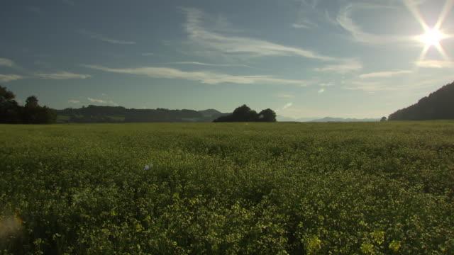 landschaftsaufnahmen - country field in gebertshum - rapeseed oil stock videos and b-roll footage