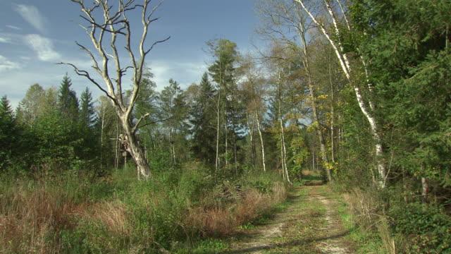 landschaftsaufnahmen - moor by the origin of obertrumersee 06 - moor stock videos & royalty-free footage