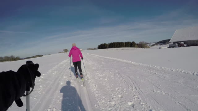 langlauf9 - telemark stock videos and b-roll footage