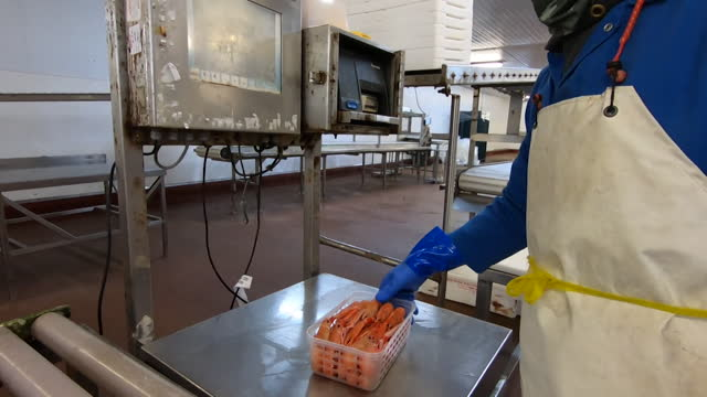"langoustines packaged up at seafood processing plant in scotland - ""bbc news"" stock videos & royalty-free footage"
