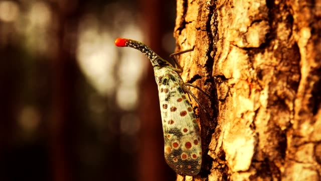 lantern bug sit on thick tree trunk in rainforest. - tropical rainforest stock videos & royalty-free footage