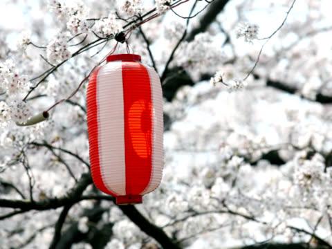 vidéos et rushes de ntsc: lanterne flânez dans le vent contre japonais sakura (vidéo - arbre à feuilles caduques