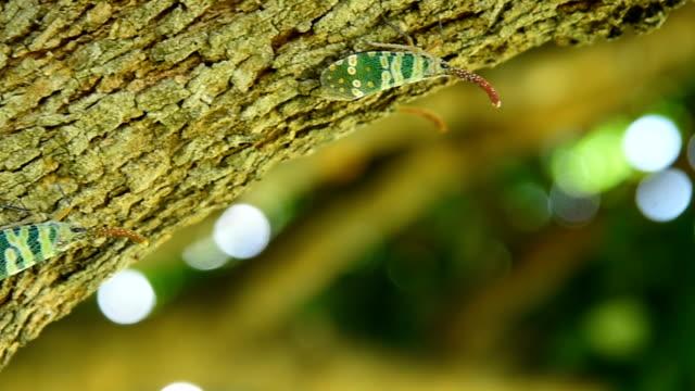 vídeos de stock, filmes e b-roll de inseto mosca lanterna - ilhas do oceano atlântico