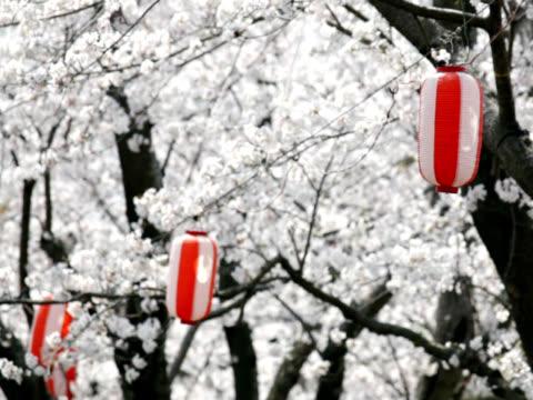 vídeos de stock e filmes b-roll de ntsc: lanterns flutter auriculares no vento contra japonês sakura (vídeo - lanterna
