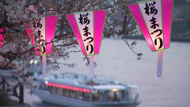 lanterns swinging with breeze with cherry blossom at dusk - 10 seconds or greater stock videos & royalty-free footage