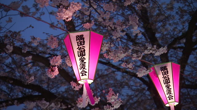 lanterns swinging with breeze with cherry blossom at dusk - lantern stock videos & royalty-free footage