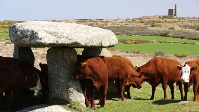 lanyon quoit, an ancient monument near zennor, cornwall, uk - lands end cornwall stock videos and b-roll footage