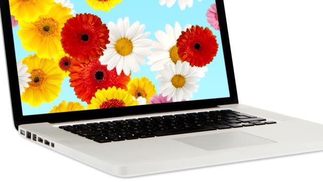 laptop - springtime stock videos & royalty-free footage