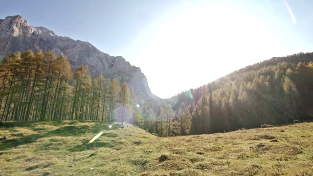 larch dorest in the mountainside - mgost stock videos and b-roll footage