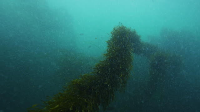 Large aquatic plant in river, POV