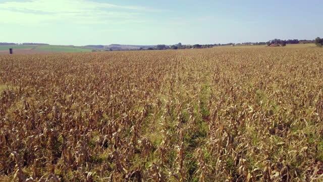 vídeos y material grabado en eventos de stock de gran área de siembra seca después de días de frío intenso - escarcha