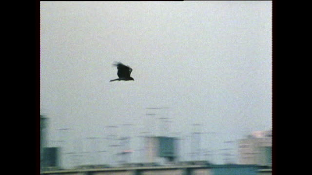 large bird flies over hiroshima cityscape; 1975 - groß stock-videos und b-roll-filmmaterial