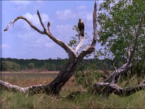a large bird perches in a bare tree. - bare tree stock-videos und b-roll-filmmaterial