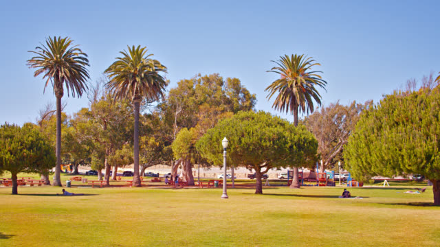 large broad park with california palms in los angeles. - wide stock videos & royalty-free footage