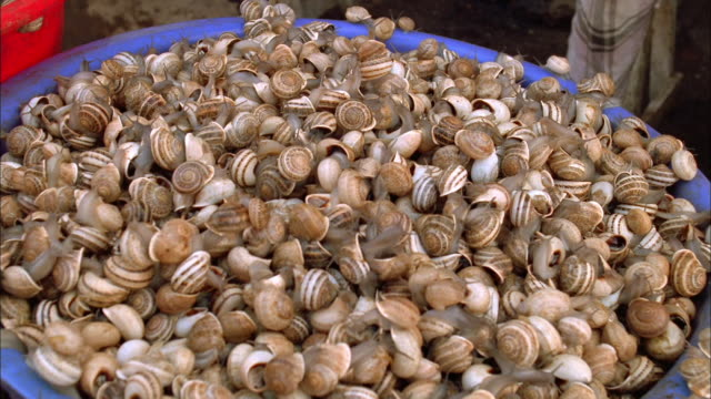 Large bucket of snail in a market in Morocco Available in HD.