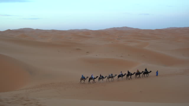 A large caravan of camels with tourist moving into the dunes of Erg Chebbi at sunset, Saharan Morocco
