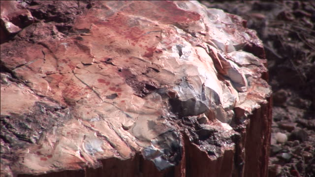A large chunk of petrified wood lies in the Petrified Forest National Park.