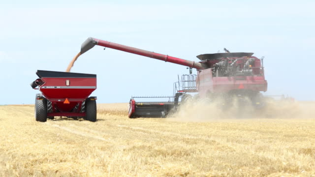 WS Large Combine and Tractor Harvesting Wheat in Field / Oyster, Virginia, USA