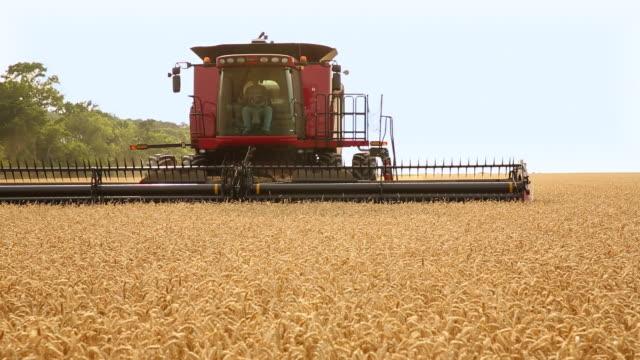 ms large combine harvesting wheat in field in hot sun / oyster, virginia, usa - コンバイン点の映像素材/bロール