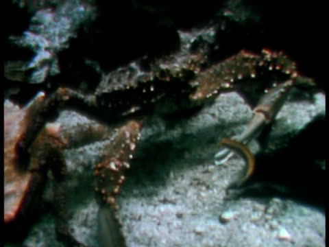 large crab walks by an empty shell. - aquatic organism stock videos & royalty-free footage