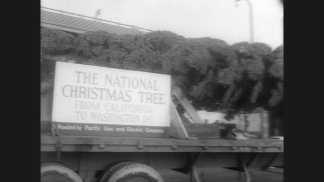 vidéos et rushes de large fir tree on its side on a truck bed / sign on side reads: 'the national christmas tree' / tree driven through the streets of washington past... - sapin