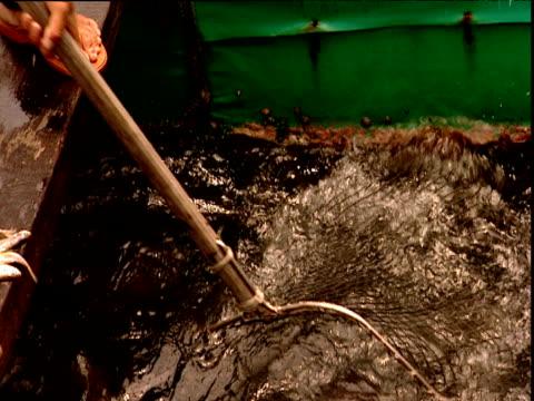 vídeos de stock e filmes b-roll de large fish scooped up in net at fish farm china - rede de pesca comercial