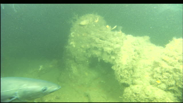 large fish swim near the sunken wreckage of the steamer portland. - antiquities stock videos & royalty-free footage