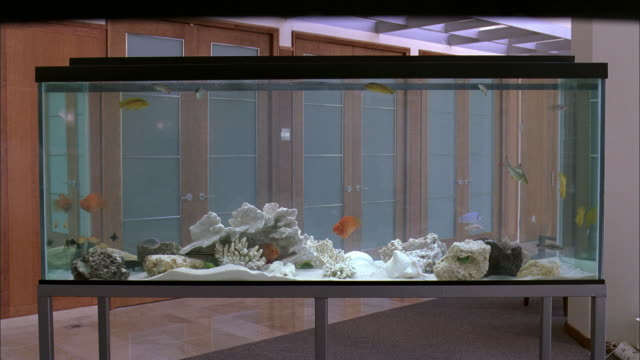 ws large fish tank with city scape behind it - letterbox stock-videos und b-roll-filmmaterial