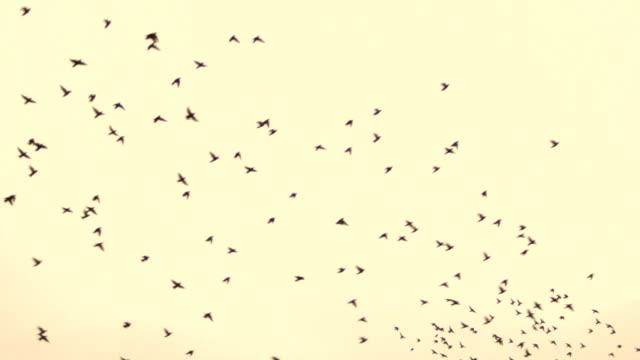 grande stormo di uccelli durante la caduta di migrazione - low angle view video stock e b–roll