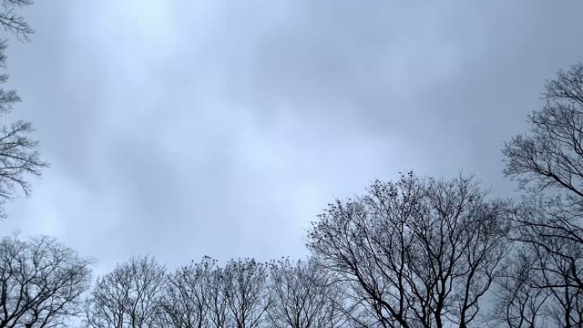 large flock of birds flies from one tree to another in spring - サウンドトラック点の映像素材/bロール