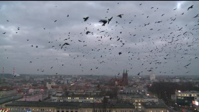 large flock of birds over city - kathedrale stock-videos und b-roll-filmmaterial