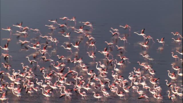 a large flock of flamingos flies low over the ocean in salin de giraud, camargue, france. - camargue stock-videos und b-roll-filmmaterial