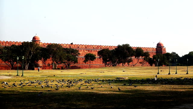 large flock of pigeons near the red fort (delhi, india) - mughal empire stock videos and b-roll footage