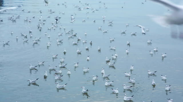 large flock of seagulls flying at beach on island - parte del corpo animale video stock e b–roll
